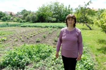 Predstavljamo:   Milenka Milinković, povrtar