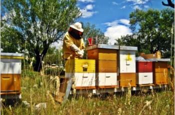 Aktuelno: O modernizaciji poljoprivrede